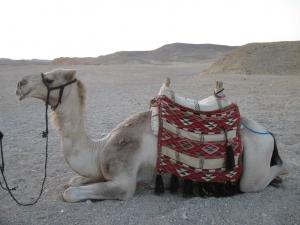 podróżowanie do egiptu
