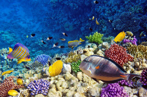 Egipt rafa koralowa rybki