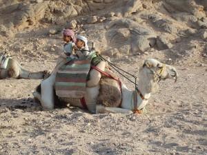 egipt oszustwa i oszuści